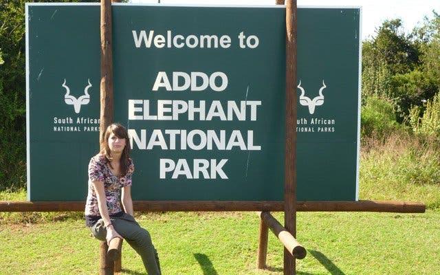 safari addo elephant park