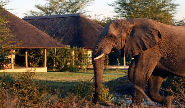 kruger park zuidafrika