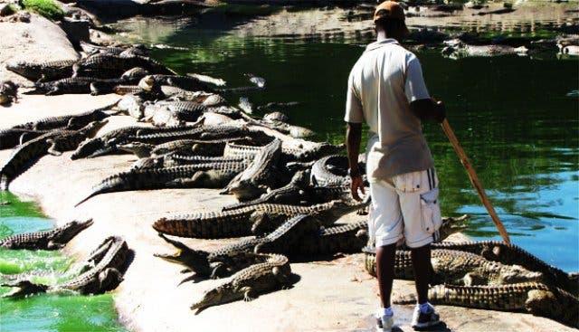krokodillenboerderij kaapstad