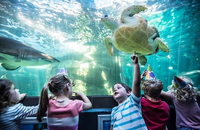 aquarium kaapstad