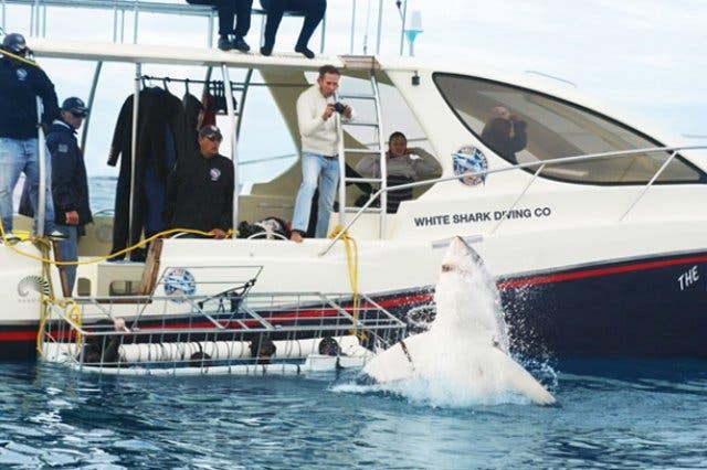 duiken met haaien zuid-afrika