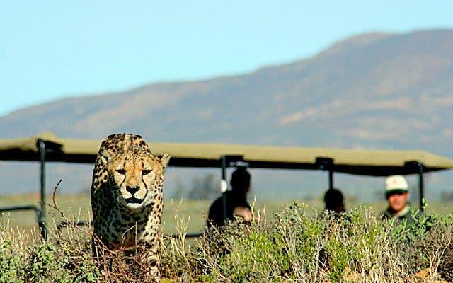inverdoorn safari kaapstad