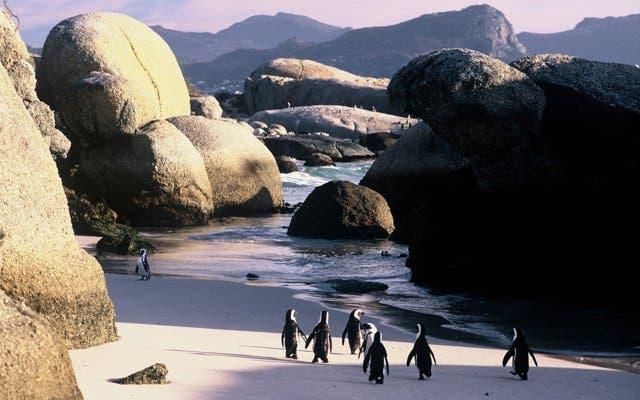 pinguins kaapstad