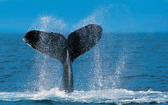 walvissen spotten zuidafrika