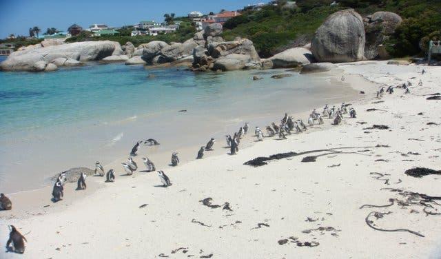 boulders beach pinguins kaapstad