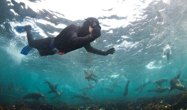 snorkelen met zeehonden