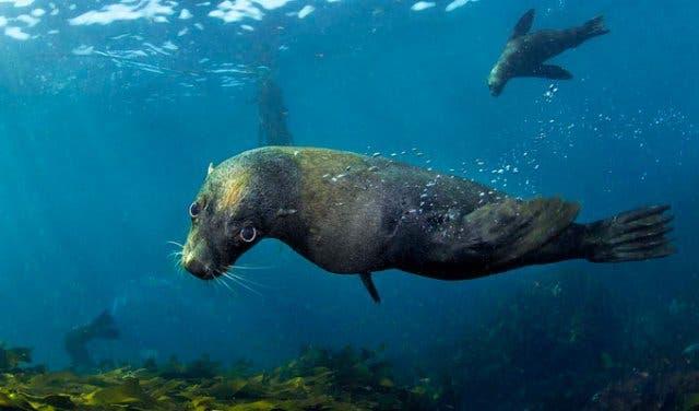 snorkelen zeehonden kaapstad