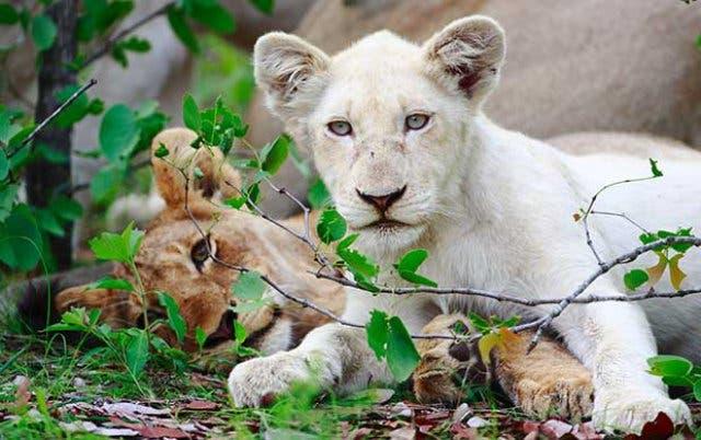 safari zuidafrika