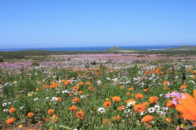 flower season westcoast
