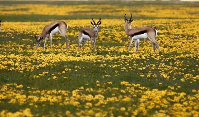 lente Kaapstad