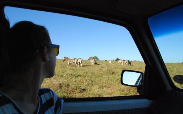 addo safari zuidafrika