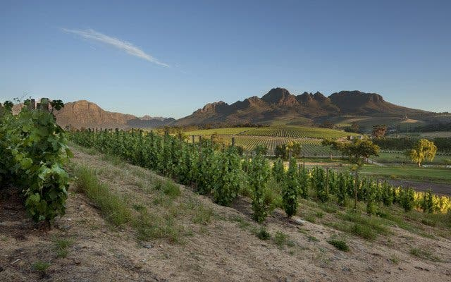 wijnlanden vakantie zuid-afrika