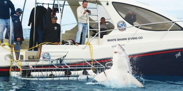 haaien duiken kaapstad