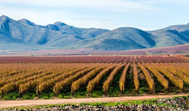 robertson wijnen zuidafrika