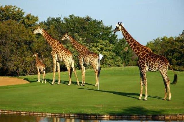 golfreizen zuidafrika