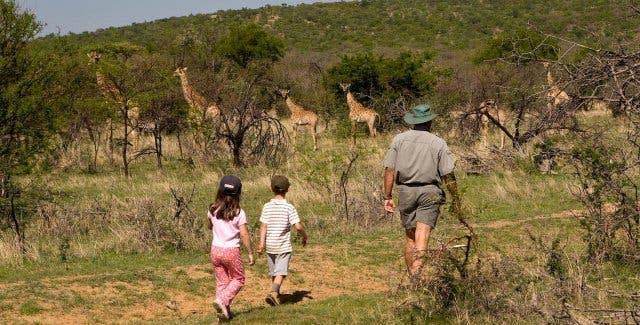 safari zuid-afrika met kinderen