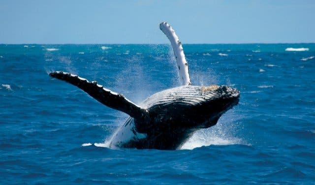 walvissen spotten kaapstad