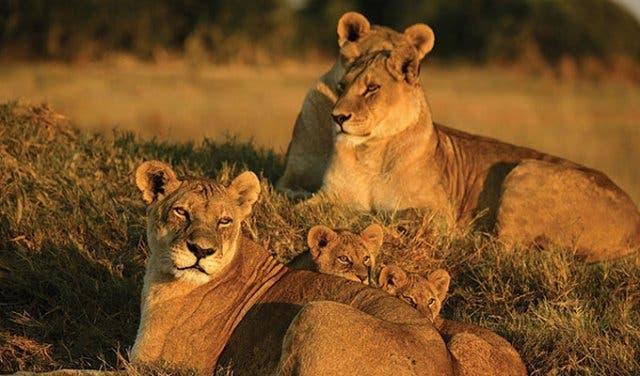 zuidafrika safari
