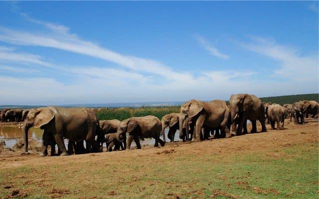 addo elephant park zuidafrika