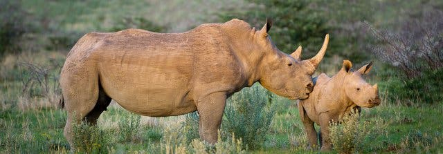safari zuidafrika namibie