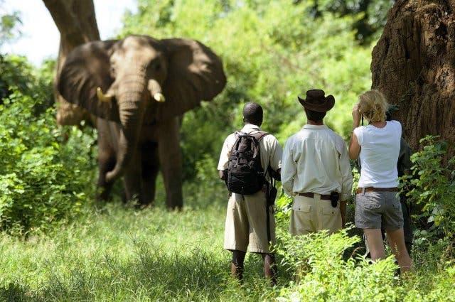 walkin gsafari zuidafrika