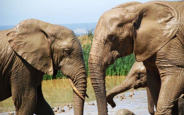 safari kaapstad