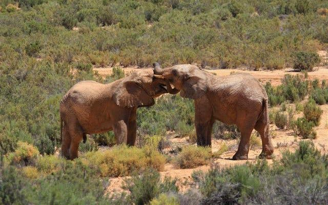 aquila safaripark kaapstad