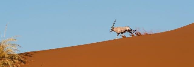 vakantie namibie zuid-afrika